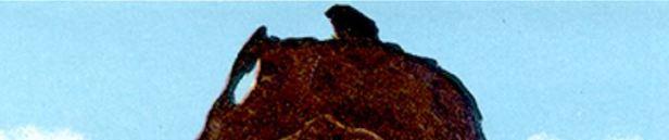 SealBear